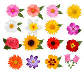 Big set of beautiful colorful flowers. Vector illustration — Stock Vector