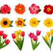 Royalty-Free Stock Vector Image: Set of beautiful flowers. Vector illustration
