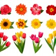 Royalty-Free Stock Obraz wektorowy: Set of beautiful flowers. Vector illustration