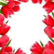 Red fresh spring flowers background. Vector illustration. — Stockvektor