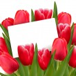 Red tulips and blank of card. Vector. — Stock Vector