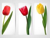 Uppsättning banners med färgstarka blomma. vektor illustration. — Stockvektor