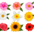 Set of beautiful flowers. Vector illustration. — Stock Vector