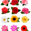 Big set of beautiful colorful flowers. Vector illustration. — Stock Vector