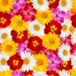 Flower background. Vector. — Stock Vector #42030041