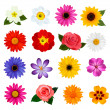 Big collection of colorful flowers. Vector illustration. — Stock Vector #46482889