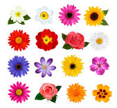 Big collection of colorful flowers. Vector illustration. — Stock Vector