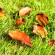 Fallen autumn leaves on green grass. — Stock Photo
