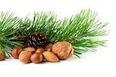 Christmas decoration with mixed nuts, pine twig and pine cones — Stock Photo