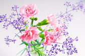 Bouquet of pink carnations — Stock Photo