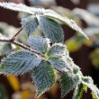 Frost — Stock Photo #36462047