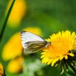 Dandelions with butterfly in the meadow — Lizenzfreies Foto