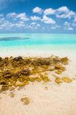Wunderschöne tropische landschaft, blauen wasser und weißen sand — Stockfoto