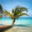 Untouched tropical beach in Maldives — Stock Photo