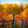 Trees Positively Ablaze With Color During Autumn In The Park — Stock Photo