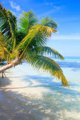 Tropical Sea Palm View — Foto de Stock