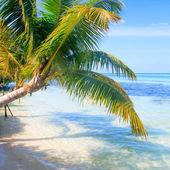 Tropical Sea Palm — Fotografia Stock