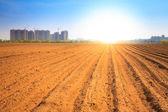Pôr do sol sobre o campo lavrado — Fotografia Stock