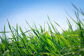 Image of green grass — Stok fotoğraf