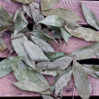 Bay leaf — Stock Photo #31251877