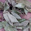 Bay leaf — Stock Photo