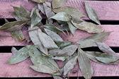 Bay leaf — Stock Photo