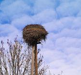 Stork's nest — Stock Photo