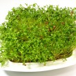 Watercress — Stock Photo #22447865