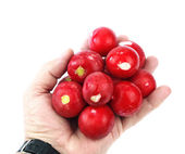 Radish in hand — Stock Photo