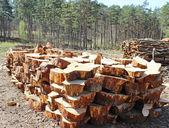Freshly cut tree logs piled up — Stock Photo