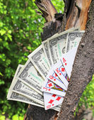Money tree and playing cards — Stock Photo
