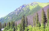 Landscape of mountains tatry Poland — Stock Photo