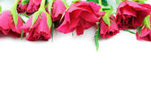 Red roses on white background — Stock Photo