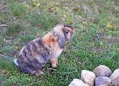 Cute rabbit on the white snow in garden — Stock Photo