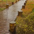 Stock Photo: Forest boardwalk