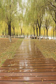 The forest boardwalk — Stock Photo