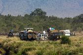 Photo safari in Africa. — Stock Photo