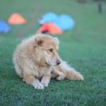 Resting Dog — Stock Photo
