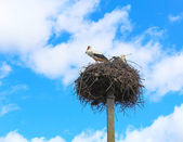 Storks flew — Stock Photo