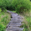 Dangerous wooden bridge — Stock Photo
