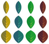 Set of color leaves — Stock Vector