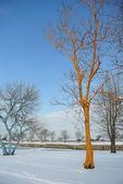 Bizarre color tree — Stock Photo