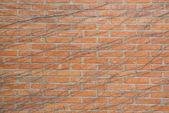 Brick wall with vine on it — Stock Photo