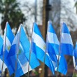 Stock Photo: Patriotism argentineflags