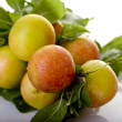 Plums on Branch - Stock Photo