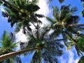 Palm trees and blue sky — Stock Photo