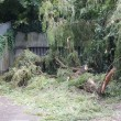 Storm damage large tree uprooted and blocking garage — Stock Photo