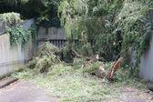 Storm damage large tree uprooted and blocking garage — Stock Photo