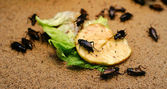 Insects on food — Stock Photo