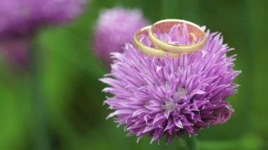 Wedding Rings on purple flower — Stock Video